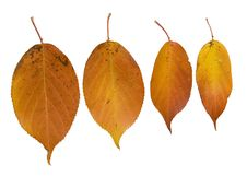 Free Four Hanging Autumn Leaves Stock Image - 3599061