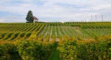 Free Vineyard Royalty Free Stock Image - 3599296