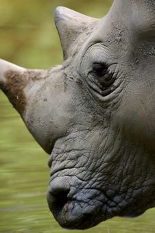 Free White Rhinoceros Stock Photos - 3599723
