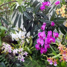 Colorful Orchids In Garden Stock Photography