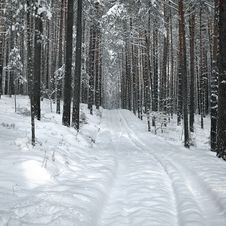 Free Winter In Forest Royalty Free Stock Photography - 35901527