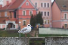 Free Bird Stock Photography - 35905042
