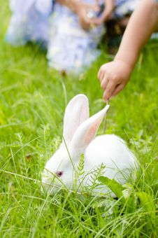 Free Little Hand Touching Rabbit Royalty Free Stock Image - 35906276