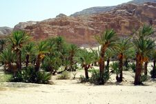 Free Egyptian Oasis Stock Photo - 35906680
