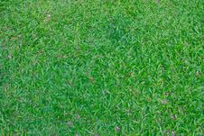 Free Green Grass Field Background Stock Photos - 35907493