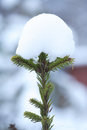 Free Snow On Fir Stock Image - 35911561