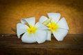 Free White Plumeria Royalty Free Stock Photo - 35914465