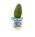 Free Cactus Royalty Free Stock Photos - 35919698