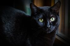 Sad Black Cat Royalty Free Stock Photo