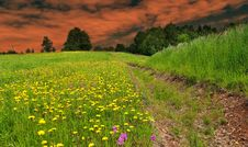 Free Dusk Over The Spring Meadow Stock Images - 35913034