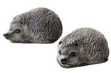 Free Hedgehogs For Garden Design Royalty Free Stock Photography - 35914307