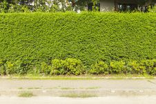 Free Green Creeper Plant Stock Image - 35914371