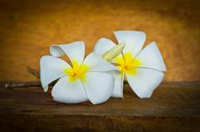 Free White Plumeria Royalty Free Stock Photo - 35914465