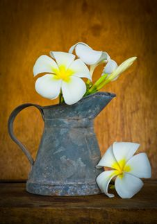 Free White Plumeria Stock Image - 35914581