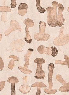 Free Background From Brown Edible Mushrooms Royalty Free Stock Photo - 35915565
