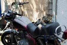 Free Cat On A Bike Stock Photography - 35917182