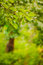 Free Spring Forest Background Royalty Free Stock Image - 35918566