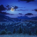 Free Midnight Coniferous Forest On A Mountain Slope Stock Photo - 35928120
