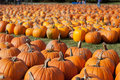 Free Pumpkins On Farm Royalty Free Stock Photography - 35929357