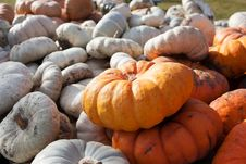 Gourds In Farm Wagon Royalty Free Stock Photography