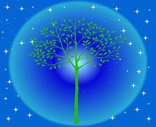 Free Beautiful Tree Stock Photography - 35929952