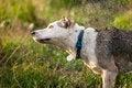 Free Shaking Dog Stock Photos - 35930353