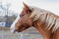 Free Profile Of Blue Eyed Horse Head Stock Photo - 35936940