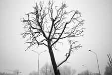 Free Winter Tree Stock Images - 35938314