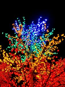 Free LED Flower Tree Stock Photo - 35939750