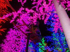 Free LED Flower Tree Stock Photography - 35939762