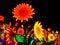 Free LED Sun Flowers Stock Image - 35939751