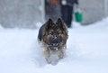 Free Running Dog Stock Photography - 35947332