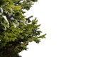 Free Fir-tree Royalty Free Stock Photos - 35947488