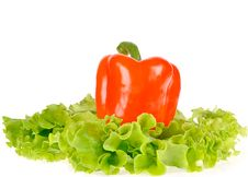 Pepper And Salad Leaf On Dish Isolated On White Royalty Free Stock Image