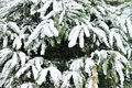 Free Christmas Tree With Snow Stock Images - 35957164
