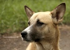 Free The Dog From Pyedog Stock Photo - 35950150