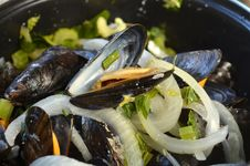 Free Mussels Royalty Free Stock Photo - 35953435