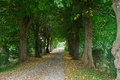 Free Country Road Running Via Trees Alley Royalty Free Stock Images - 35961089