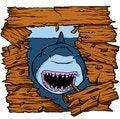 Free Shark Attack Royalty Free Stock Photography - 35963837