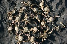 Free Crabs Formation Stock Photos - 35961453