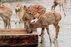 Free Deers Stock Photo - 35970170