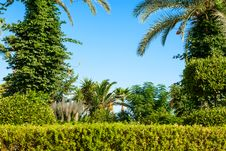 Free Palm Tree Landscape Stock Image - 35971101