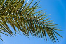 Free Palm Tree Landscape Stock Photography - 35971102