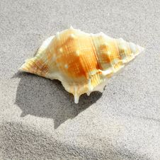 Free Sea Shells Royalty Free Stock Photography - 35979647