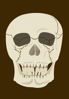 Free Skull Stock Photos - 35984823
