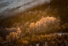 Icy Trees In The Valley Stock Photography