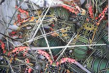 Free Fresh Live Lobsters In A Water Basin, Hong Kong Stock Photography - 35991612