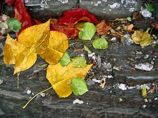 Free Autumn Leaves On Rocks Stock Photos - 35994053