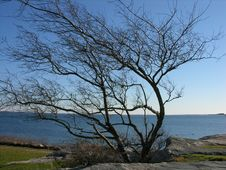 Free A Leafless Tree Along The Ocean Stock Photos - 360383