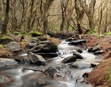 Free Creek At The Gorge Royalty Free Stock Photography - 361177